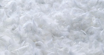 Oreillers en duvet de plumes Mira